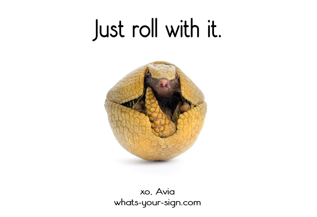 armadillo roll with it avia whats your sign