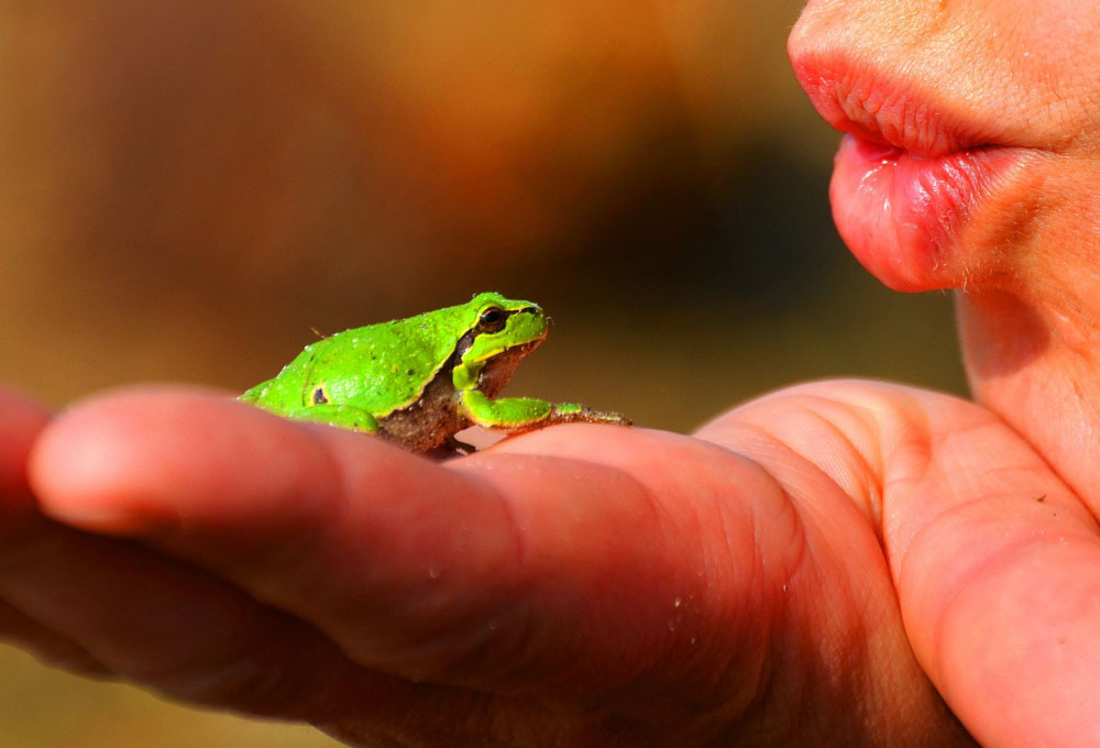 frog meaning and transition