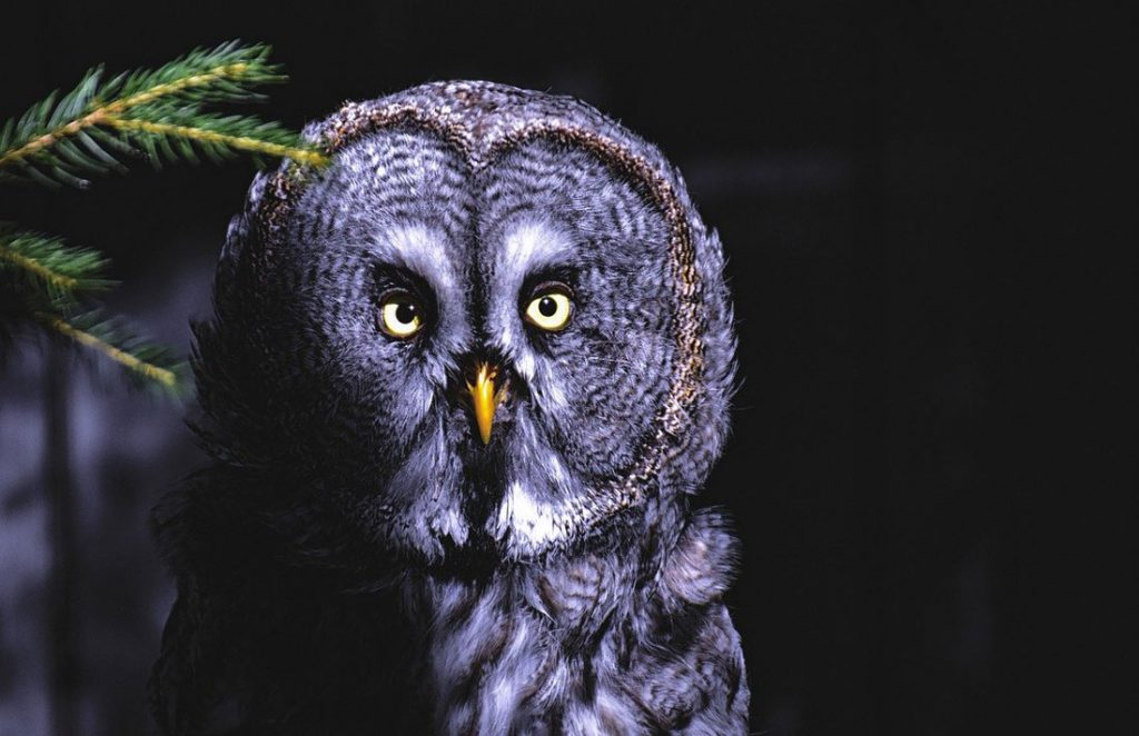 Owl Meaning and Dispelling the Owl as an Omen of Death