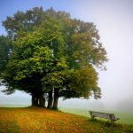 Tree Hugs and Ways to Recognize Arbor Day