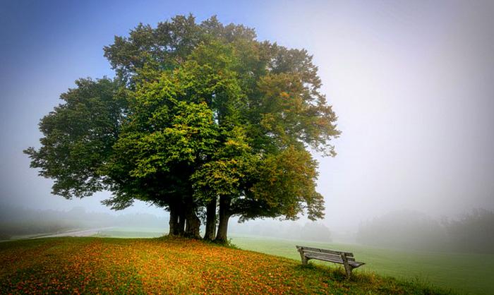 Recognizing Arbor Day
