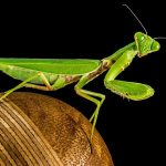 Lessons from a Praying Mantis for Managing Stress